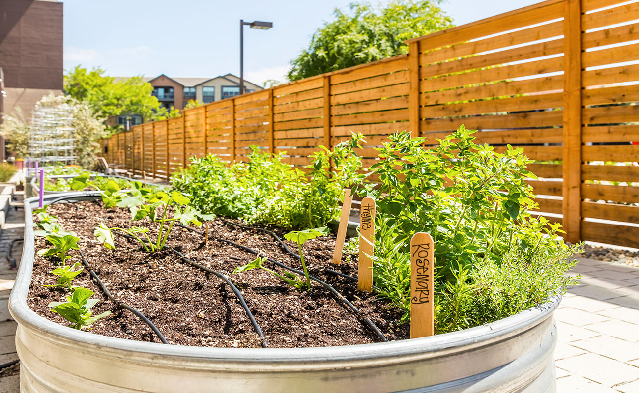 Encore - Community Herb Garden