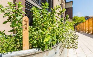 Encore - Herb Garden